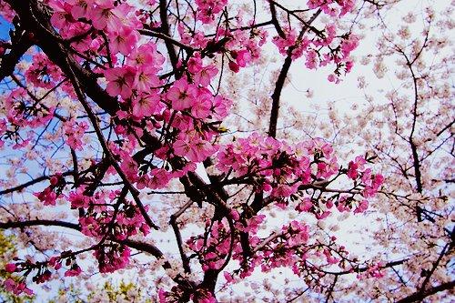 Vashi Dominguez, Vashi.com, pink, flowers